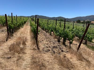 20210612 Casa Dumetz vineyards