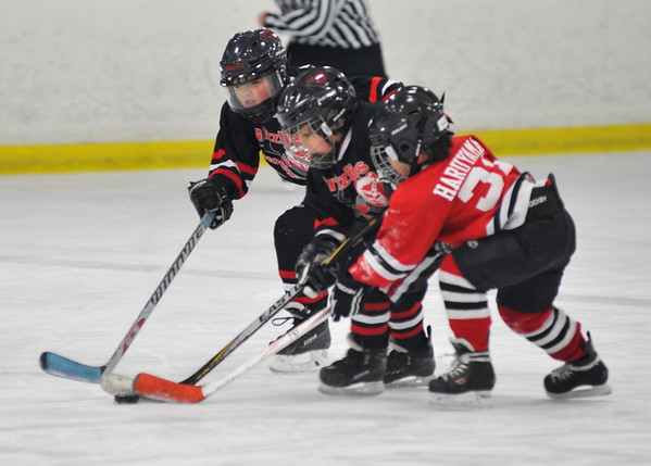 2015-16 Red Sharks Mite Hockey