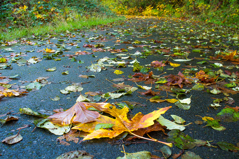 Leaves lead the way to Ruckel Creek Falls (Donna Herzfeldt-Kamprath)
