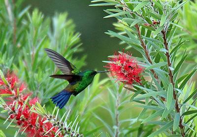 Birds at Xandari (15 species)