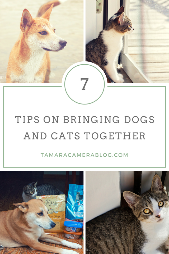 Do you have a dog and want a cat too? Or do you have a cat and you're considering getting a dog? Here's 7 tips for a peaceful household #ad #PurinaMysteries