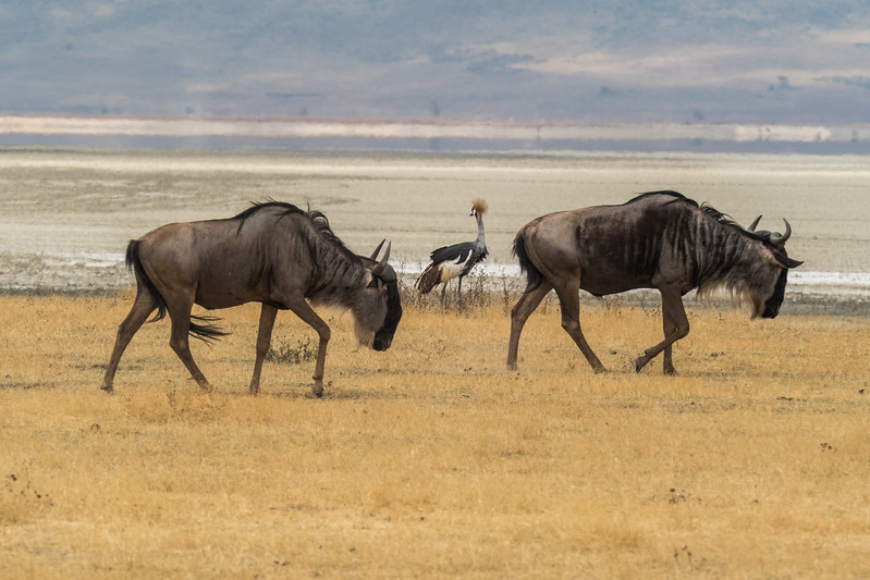 Tanzania_Safari-best-64.jpg