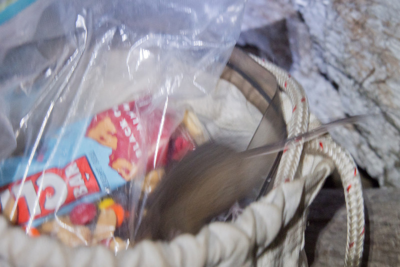Mouse in food bag at Cribbs