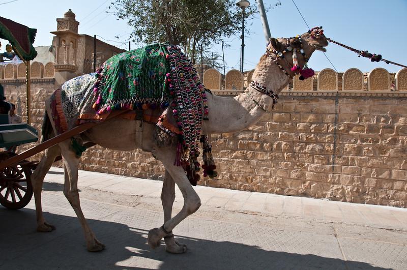 POW Day 5-_DSC3427- Jaisalmer.jpg