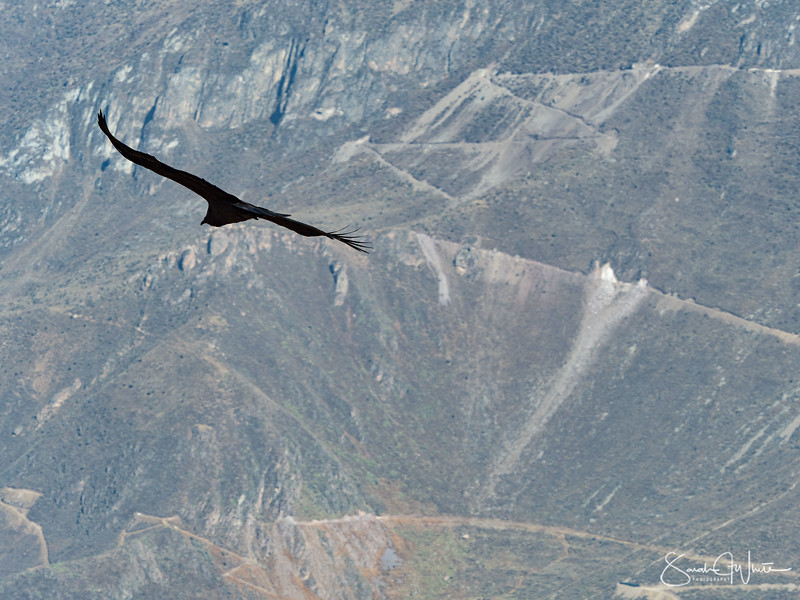 Peru-15102019-423.jpg