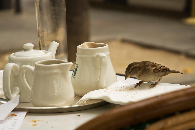 breakfast bird.jpg