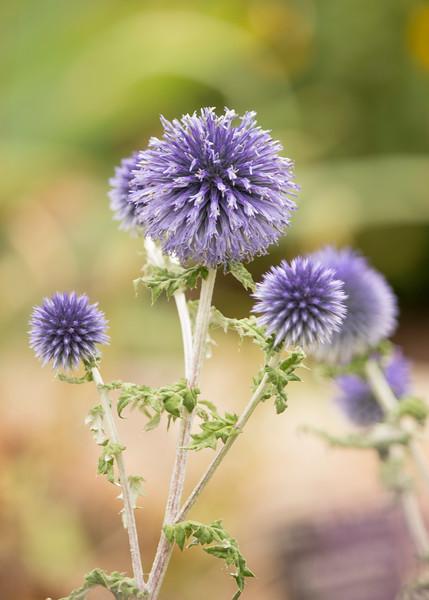 KoRedfield-Floral21.jpg