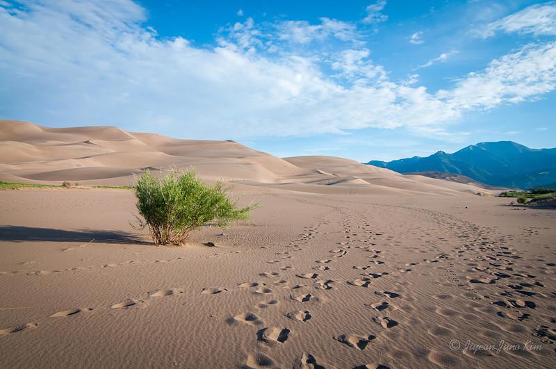 USA-Colorado-Great Sand Dunes.jpg