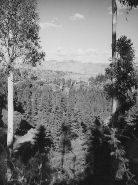 1937, Urban Forest