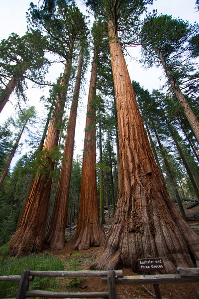 20150504-Yosemite-7D-IMG_6464.jpg