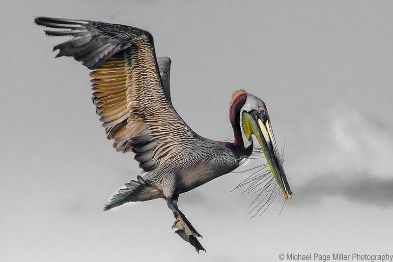 Florida Birds 23-04-16_1644.jpg