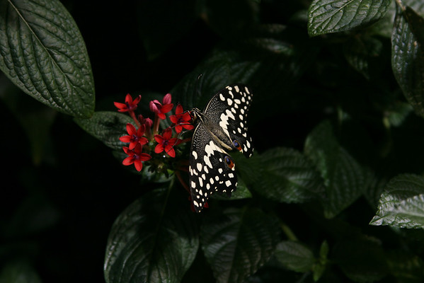 Orchids, Butterflies & Misc DC 3/2008