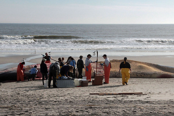 DBKphoto / Beached Whale  01/23/2012