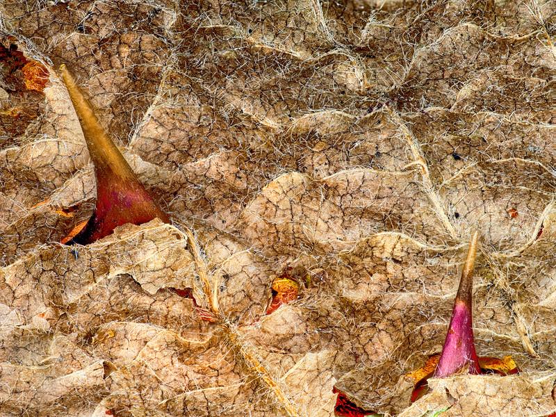 Leaf Sharks