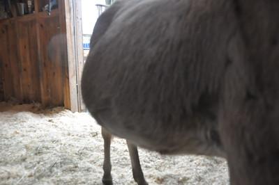 Granny the Donkey
