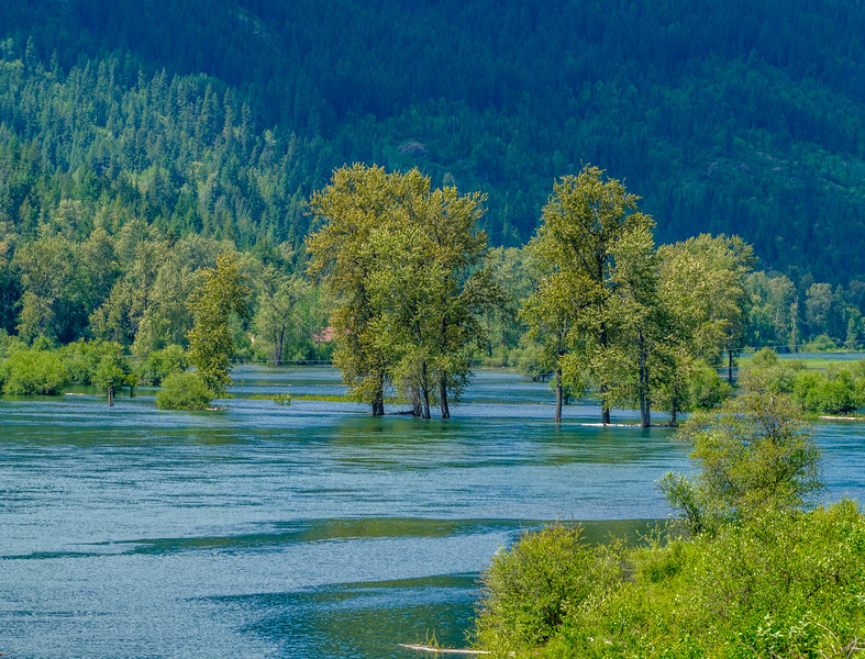 Slocan River Flood