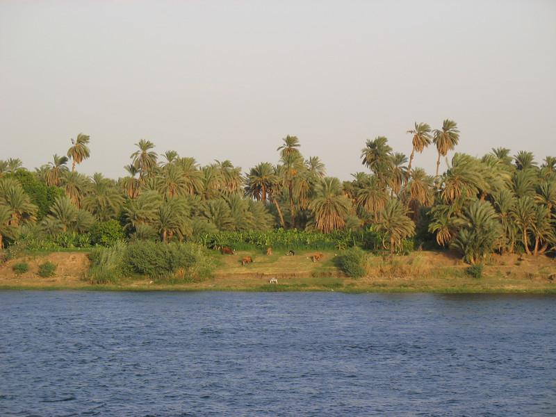 Egypt-347.jpg