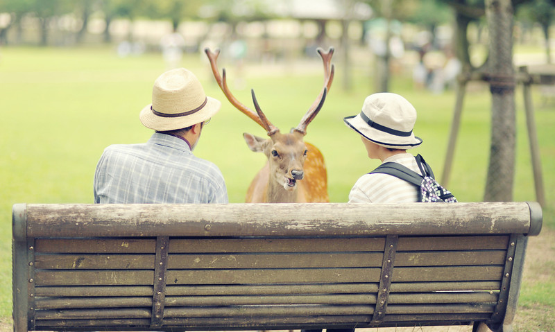 Old couple in Nara waiting at the bench talking to deer
