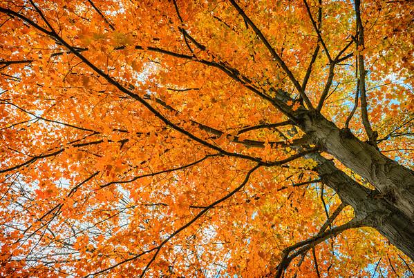 Fall Colours 2013