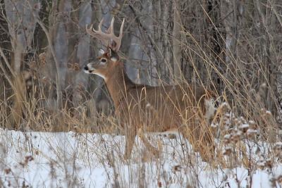 Deer 27 Dec2009