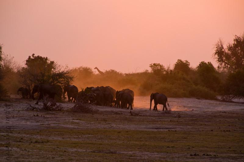 elephants (2).jpg