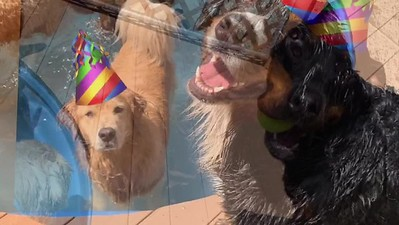 Griswold's 7th Birthday