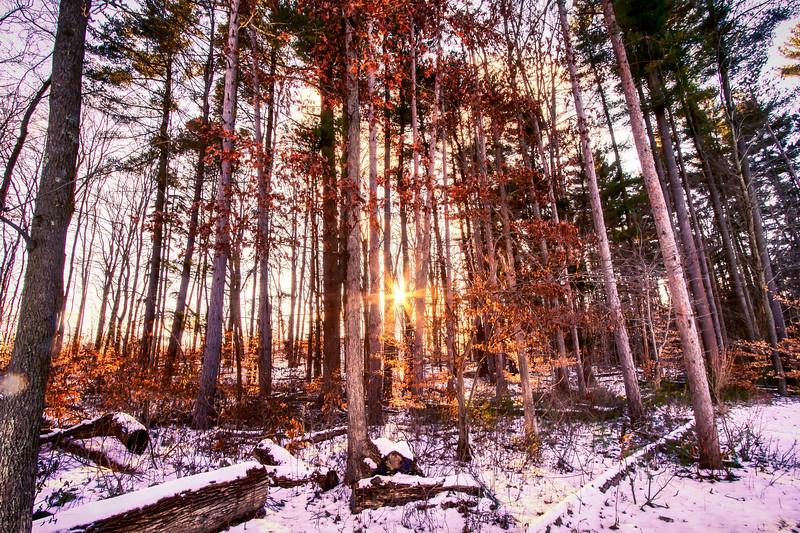 Sunny Trees-2.jpg