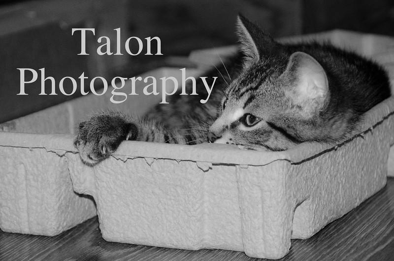 Kitten in a box.jpg