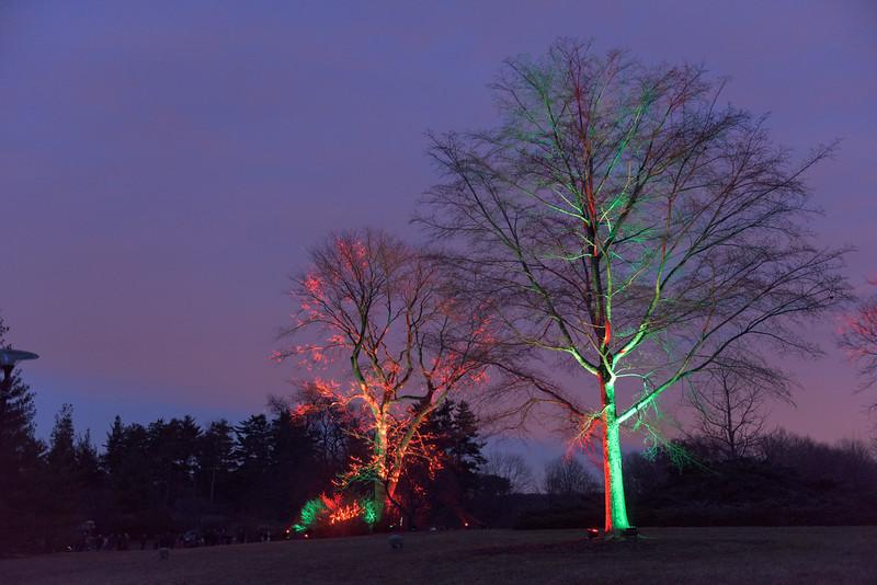 Illumination at the Morton Arboretum