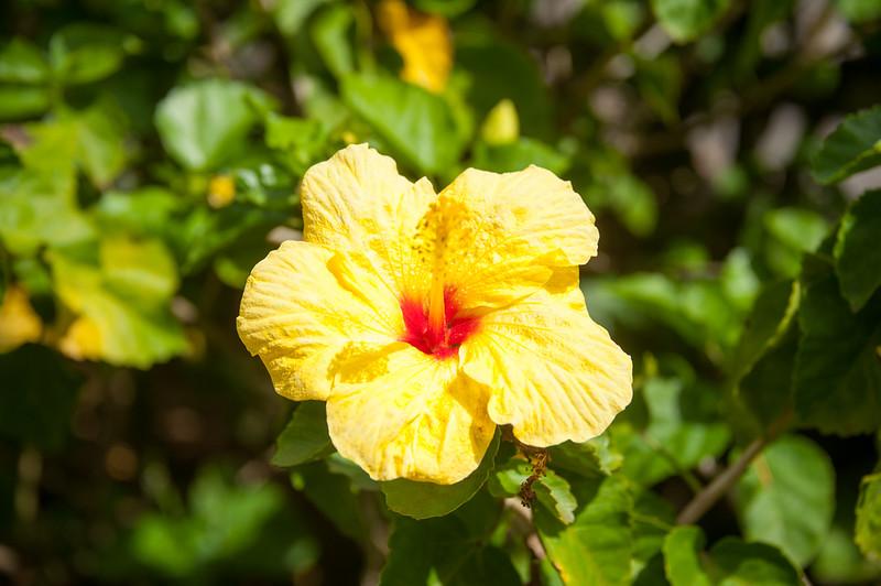 Maui_20181024_175140-300.jpg
