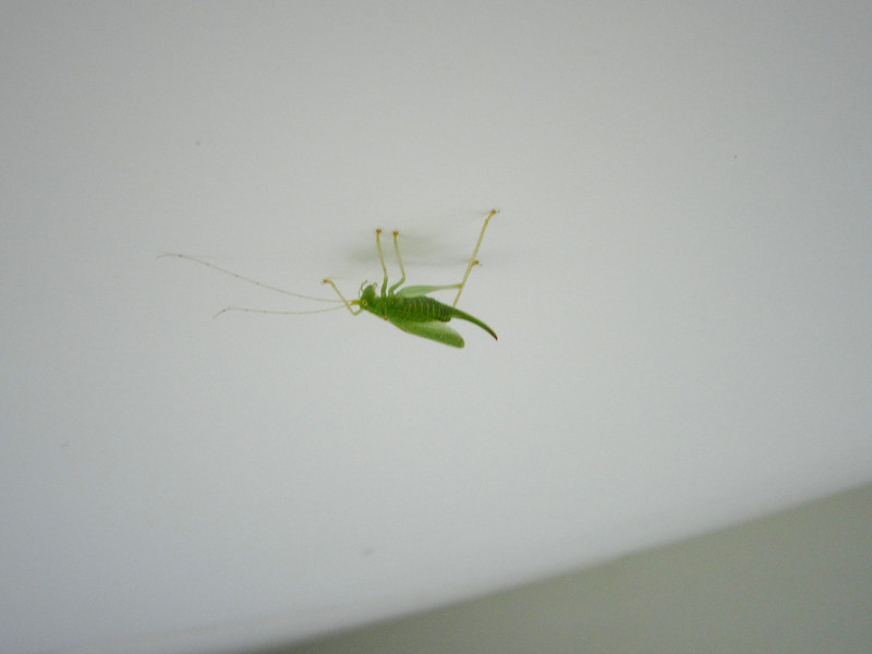 Katydid: shared our AirBNB with this one.