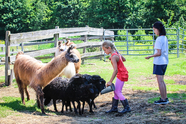 July 29: Fun on the Farm