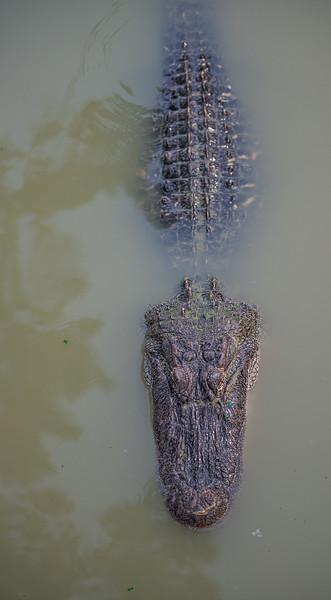 Gator-Country-8395.jpg