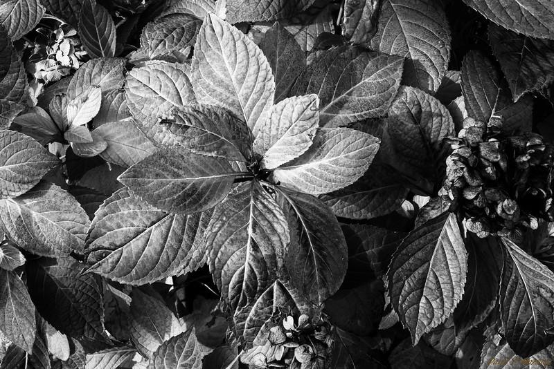 Leaf Lighting