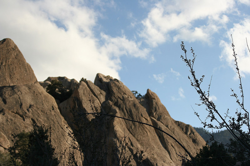 rocks and branches.jpg