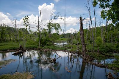 2021 06 Murfreespring Wetland