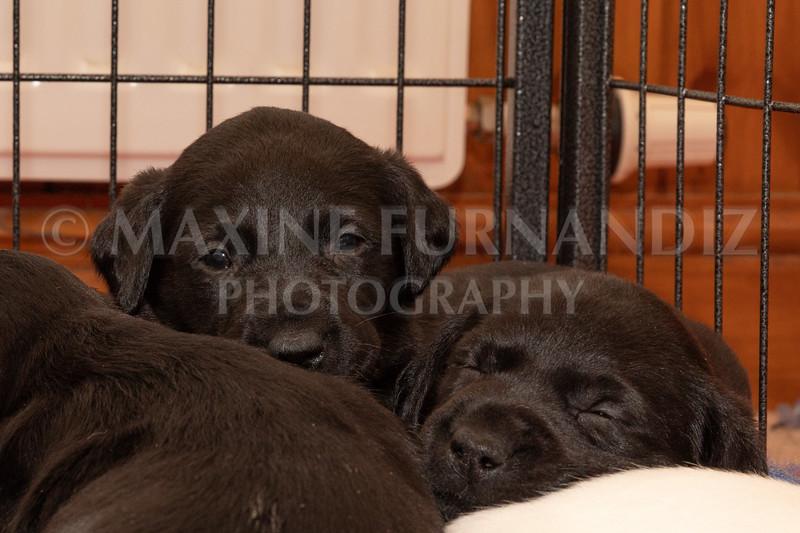 Weika Puppies 2 Mar 2019-8474.jpg
