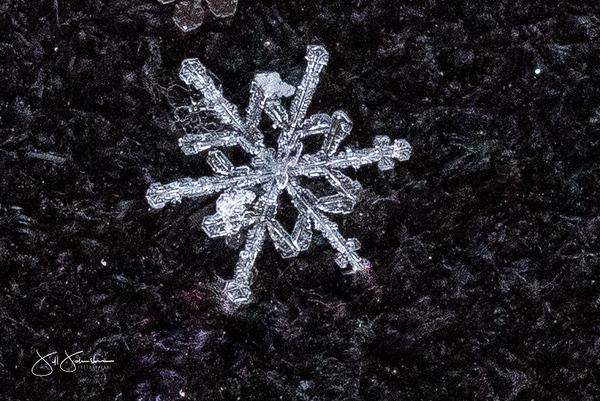 snowflakes-1425.jpg