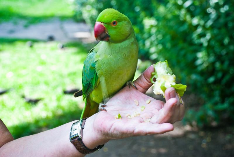 Hyde PArk Birds (20 of 25).jpg