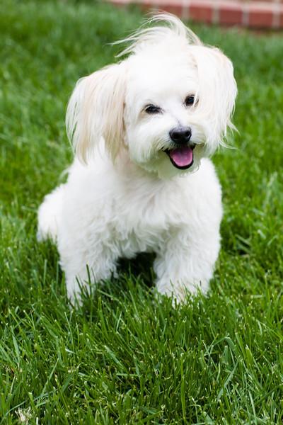 opal mike dogs (1 of 1)-88.jpg
