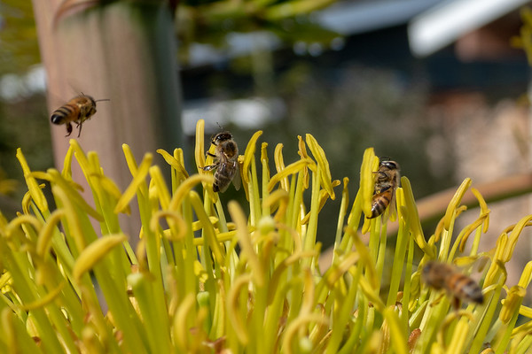 Bees and Insects 2019