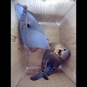 Bluebird Nestbox 2018