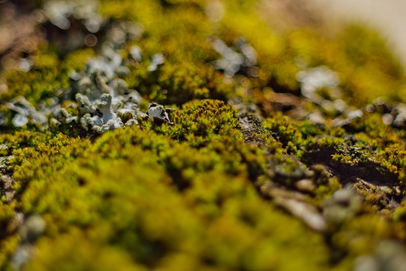 Moss on the Tree 7