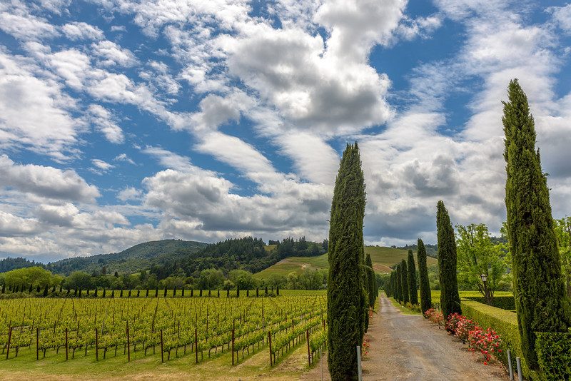 Healdsburg-April 27, 2014-431-Edit.jpg
