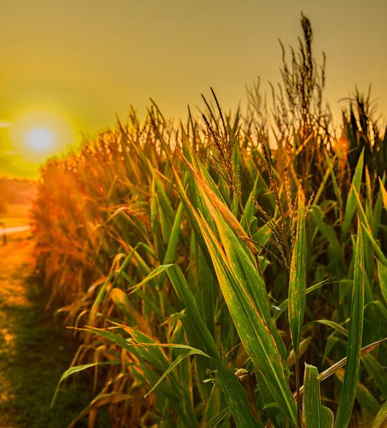 RIVER FARMS  8