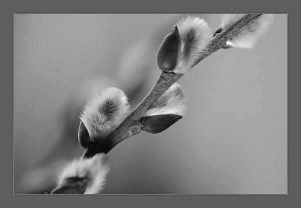 Open Black & White / Monochrome