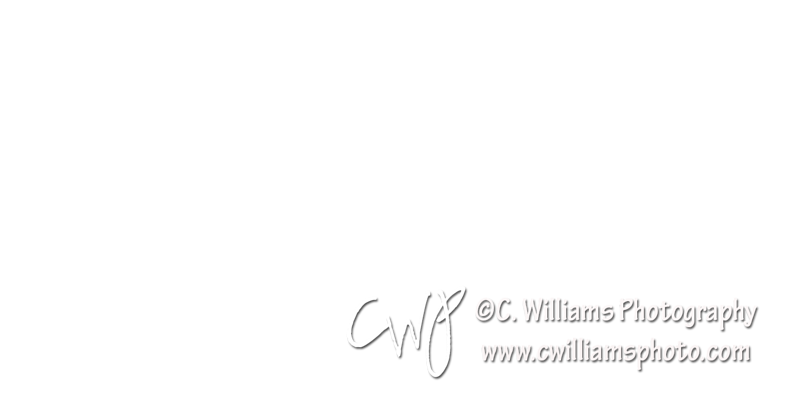 CWP White dBottom Right New.png