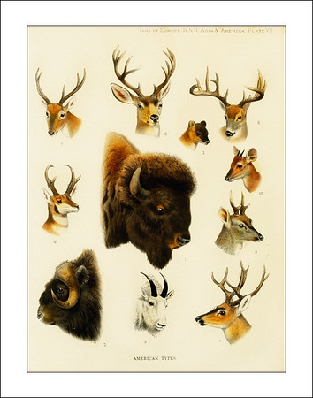 Game Mammals of North America and Asia 1900