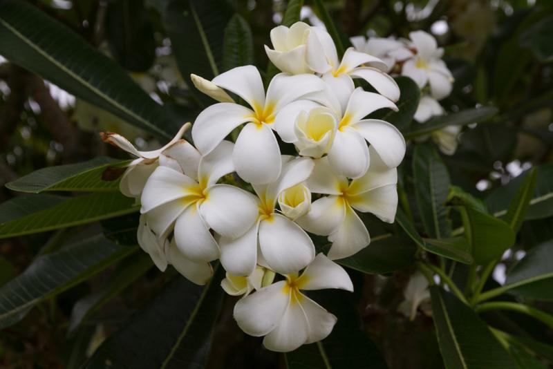 2012_06_10 Waikoloa HI 030.jpg