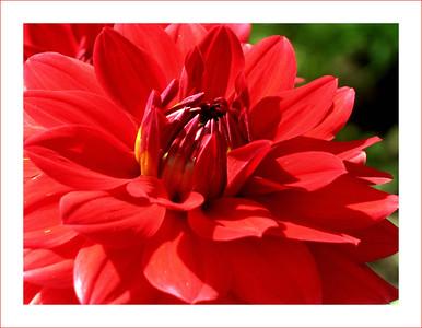 Flora•Флора